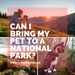 Can I bring my pet to a national park?